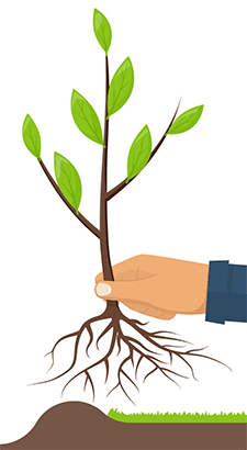Illustration of a hand holding a sapling with roots